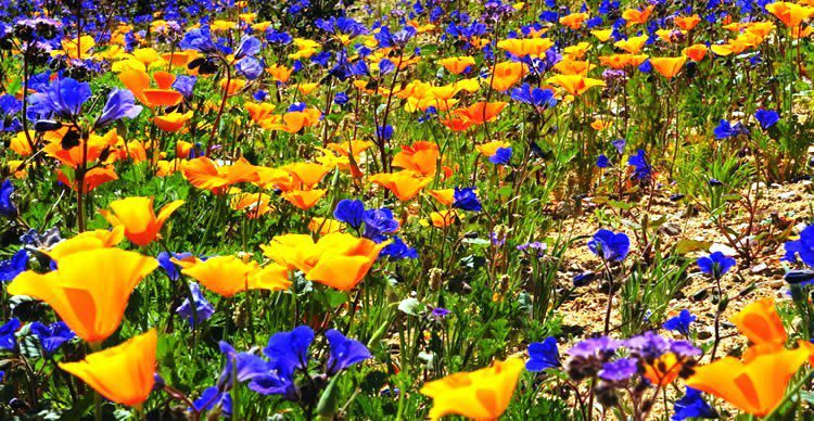 dolina zvetov
