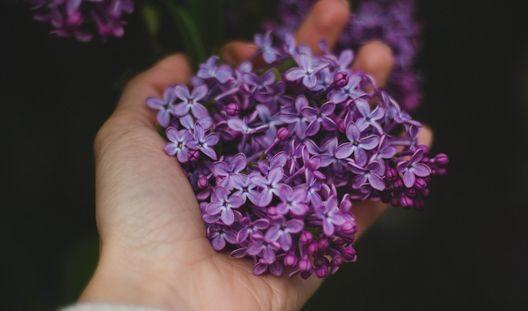 zveti v mugskih rukah